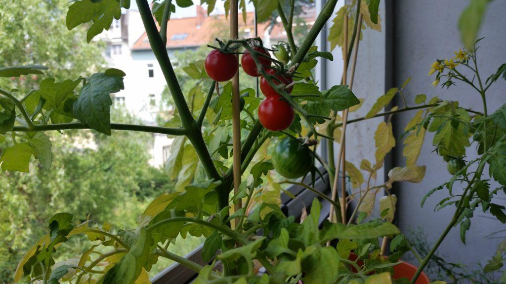 Balkon-Garten anlegen