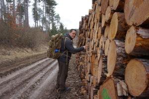 Wandern in Thüringen - Kienspan sammeln