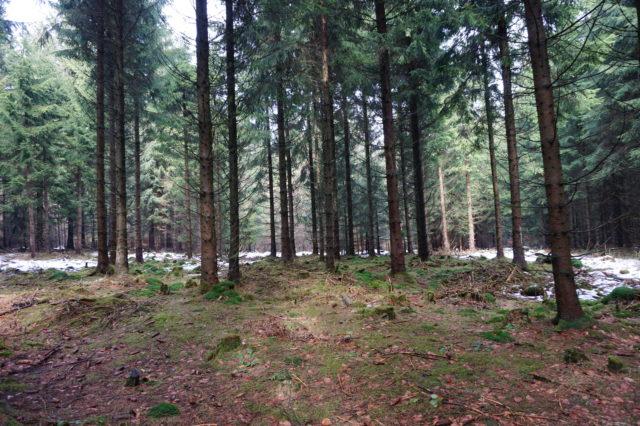 Wandern in Thüringen – der Thüringer Wald