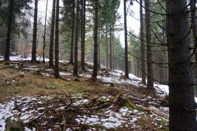 Thüringer Wald im März mit Schnee