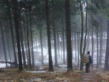 Wandern in Thüringen - der Thüringer Wald