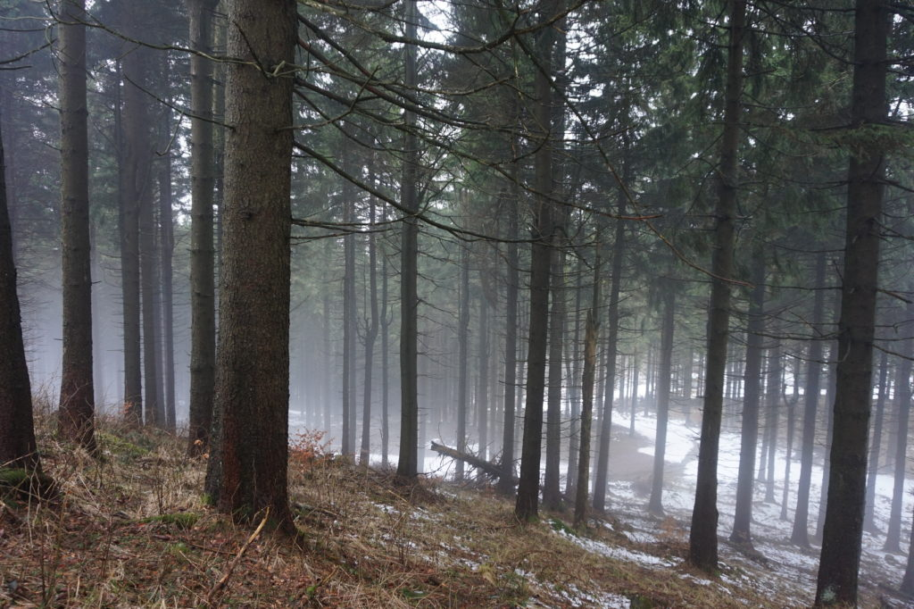 Thüringer Wald im März