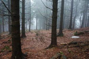 Wandern in Thüringen - Rennsteig