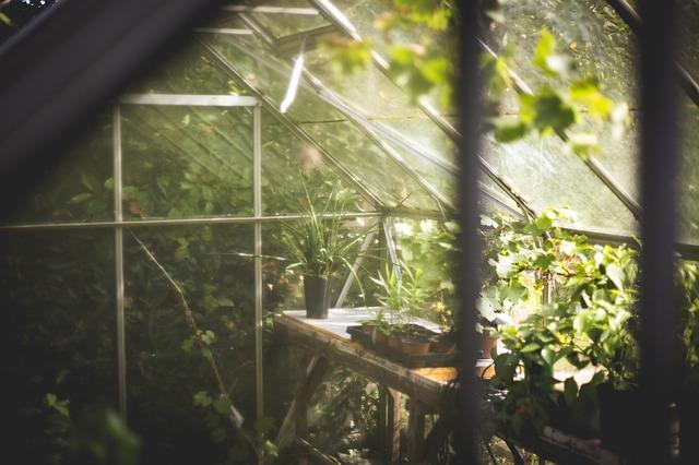 Gemuse Pflanzen Im Wintergarten Nutze Jeden Platz