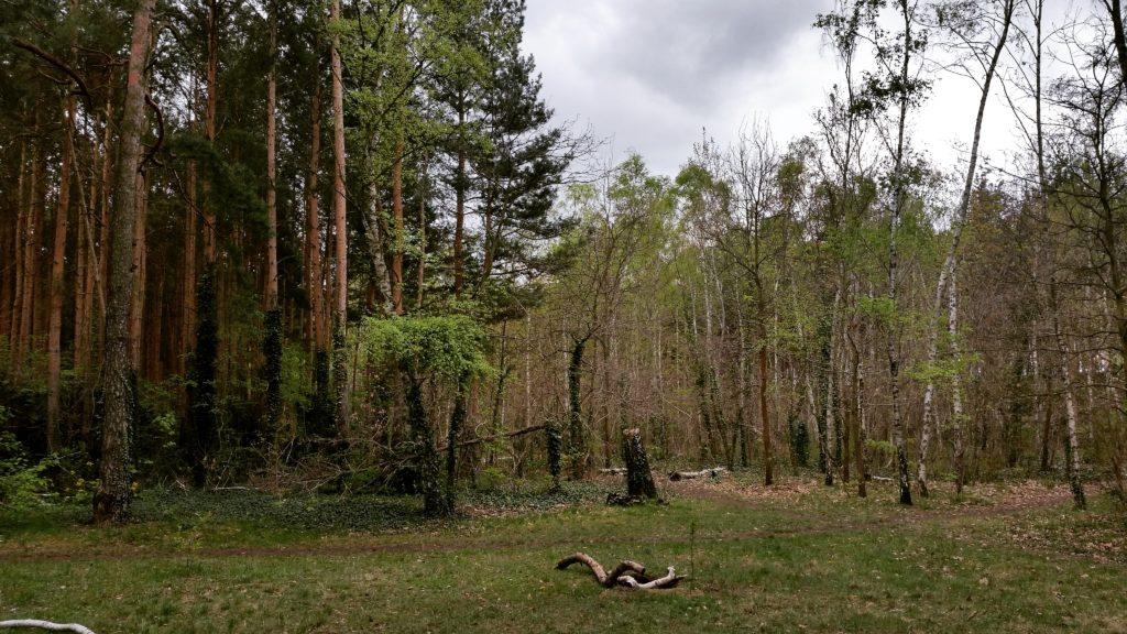 Das richtige Campingzubehör - Wälder in Berlin