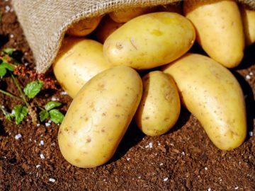 Diese 7 Nahrungsmittel sollten in deinem Vorrat nicht fehlen