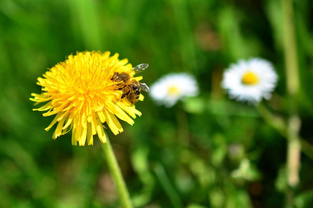 essbare Wildpflanzen und Heilkräuter