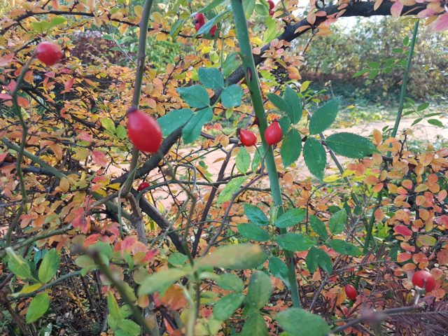 Beeren und Früchte im Herbst