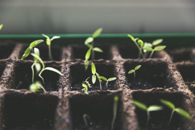 Selbstversorgung aus dem Garten